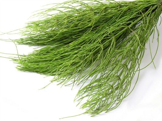 Image result for Horsetail Herb