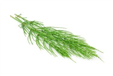 Benefits Of Horsetail Herb Doctor Maher S